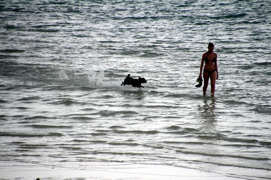 В Госдуме предложили разрешить посещать пляжи с питомцами