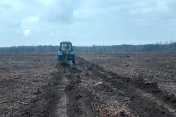 В лесхозах Тамбовской области готовят почву для весенней посадки деревьев