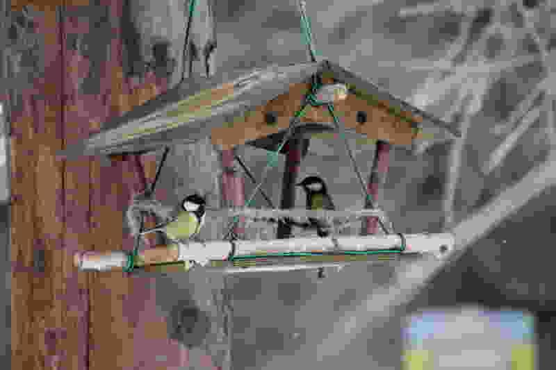 """В регионе пройдёт эко-акция и конкурс """"Покормите птиц зимой"""""""