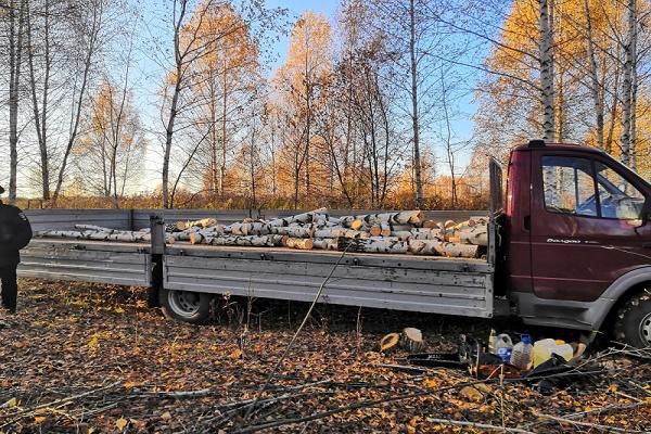 В Тамбовской области по горячим следам выявлена незаконная рубка деревьев