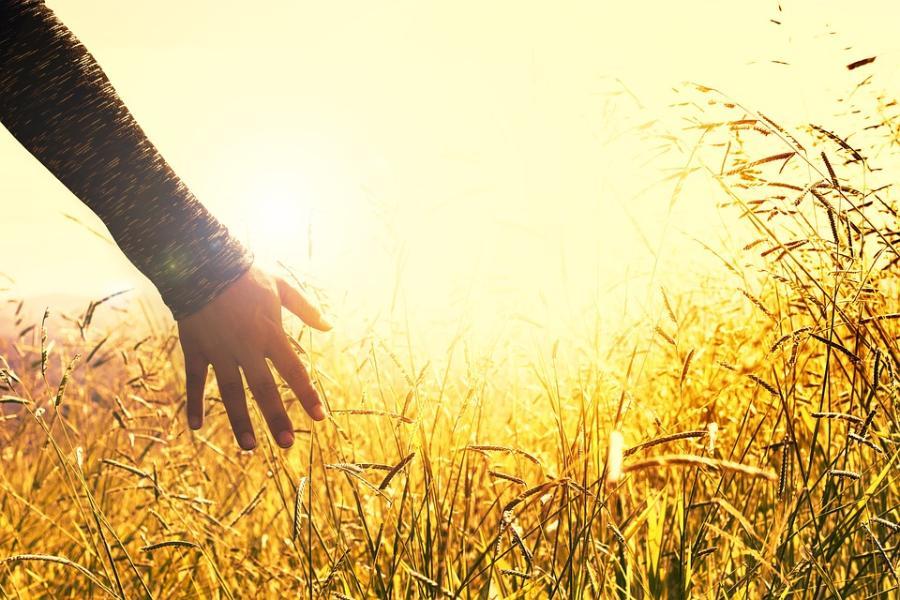 В Тамбовской области растёт число вакансий в сфере сельского хозяйства