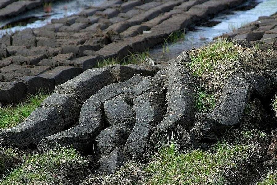 В Тамбовской области возобновят добычу торфа