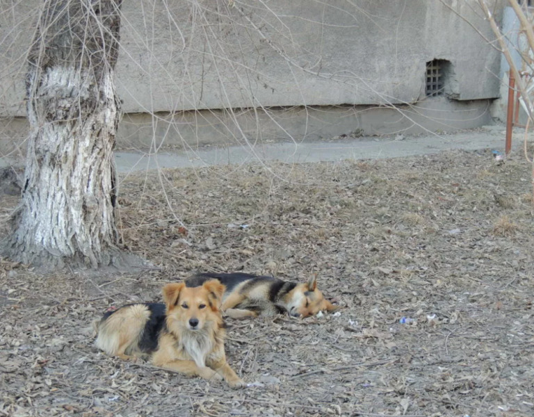 Городские службы займутся отловом бездомных животных в Тамбове