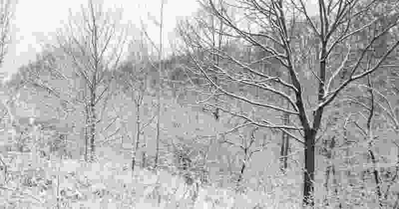 На следующей неделе в Тамбовскую область придут снегопады