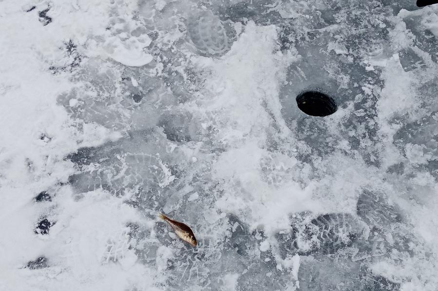 Под Котовском состоялся Кубок Тамбовской области по рыболовному спорту