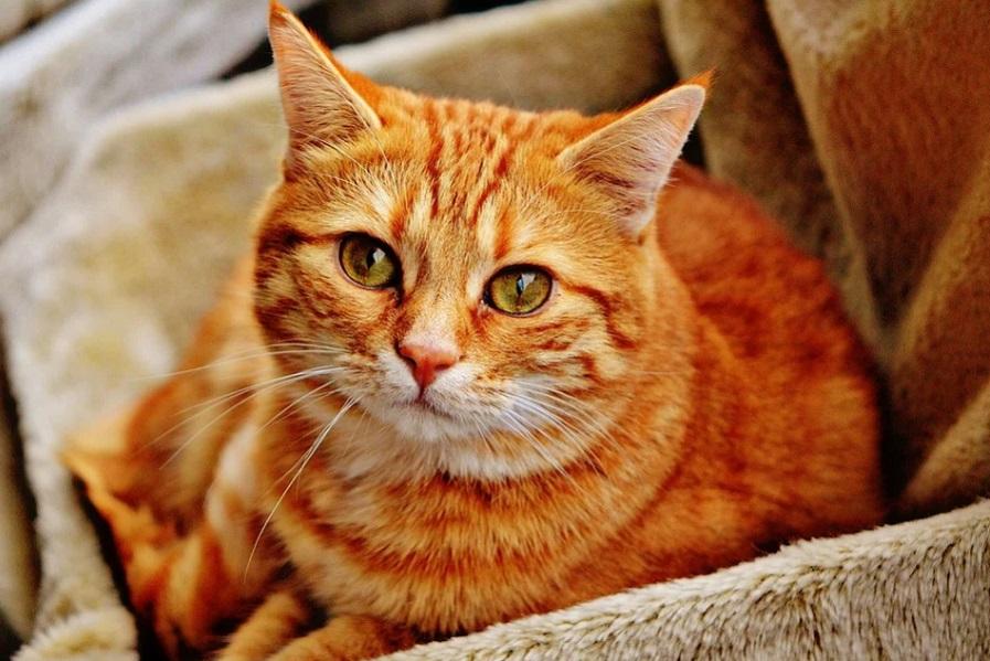 Правительство поддержало запрет изымать домашних животных за долги