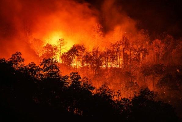 Регионы России наделили полномочиями по тушению природных пожаров