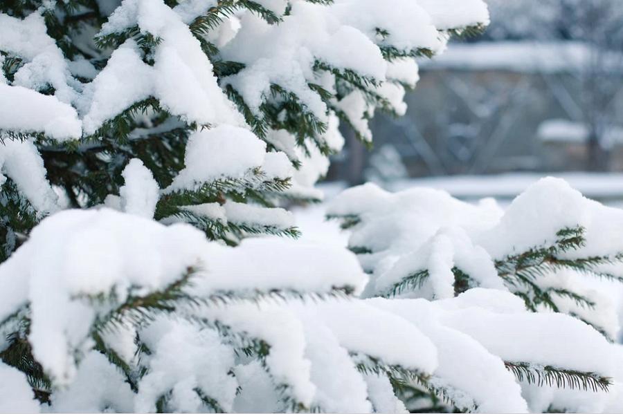Синоптики обещают Тамбову обильный снегопад