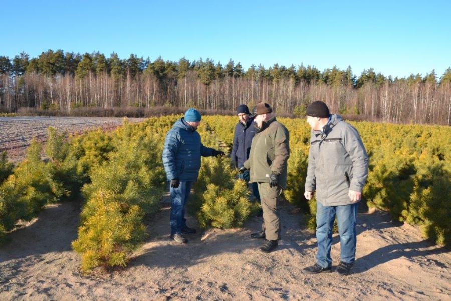 Тамбовские лесоводы перевыполнили план по выращиванию саженцев