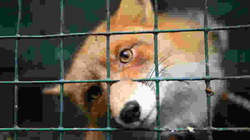 В Тамбовской области выявлено 4 новых случая бешенства животных