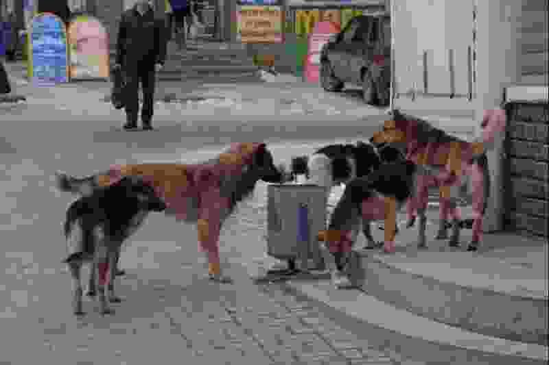 Власти Тамбова предлагают решить проблему бездомных животных стерилизацией