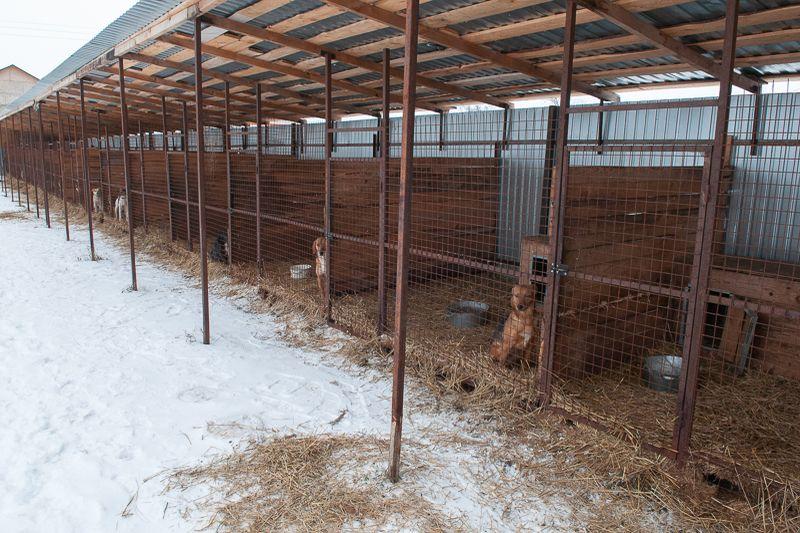 Волонтёры передали приюту для бездомных животных 250 кг корма