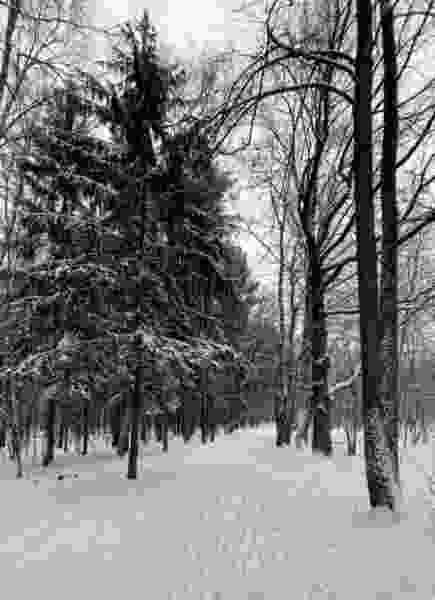 Выходные в Тамбове будут снежными и тёплыми