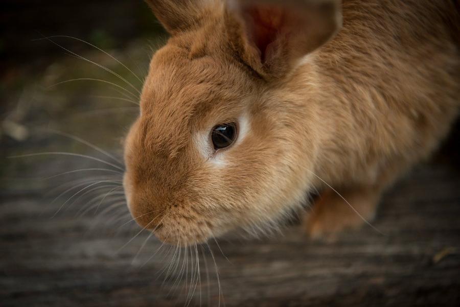 Житель Староюрьевского района украл у соседа кроликов