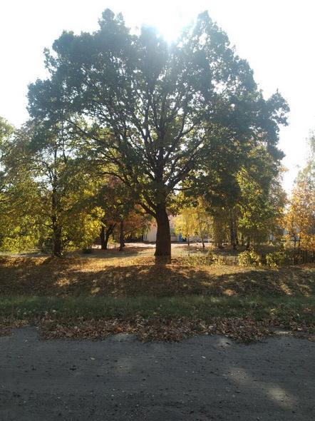 Два дерева в Тамбовской области признаны памятниками живой природы