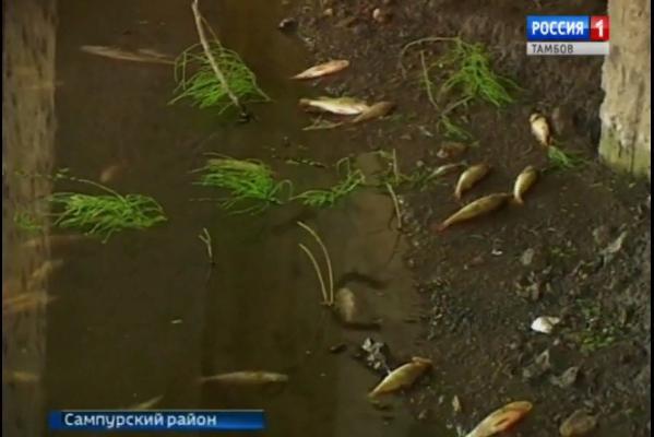 """ООО """"Тамбовский бекон"""" заплатит 5,5 млн рублей за массовую гибель рыбы"""