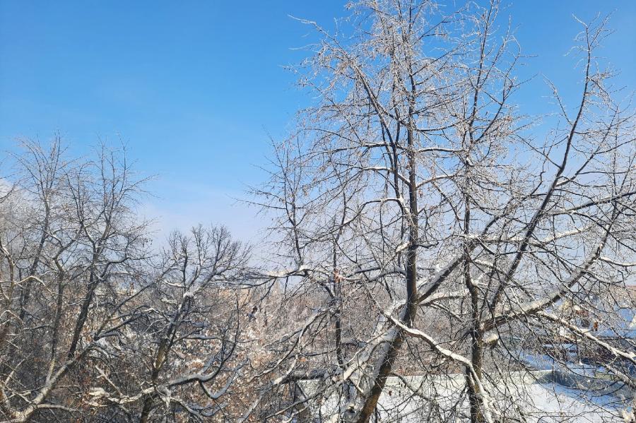 Предстоящей ночью в Тамбовской области резко понизится температура