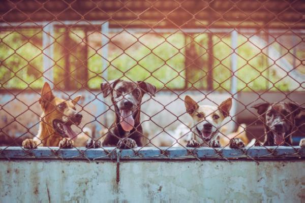 В регионах планируют запустить сеть приютов для животных