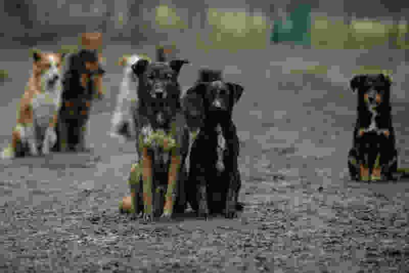 В Тамбове у старого автовокзала неизвестный давил бродячих собак