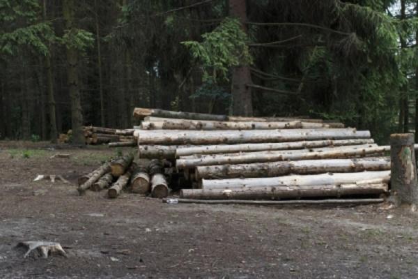 В Тамбовской области будут судить сотрудницу лесного хозяйства заслужебные подлоги