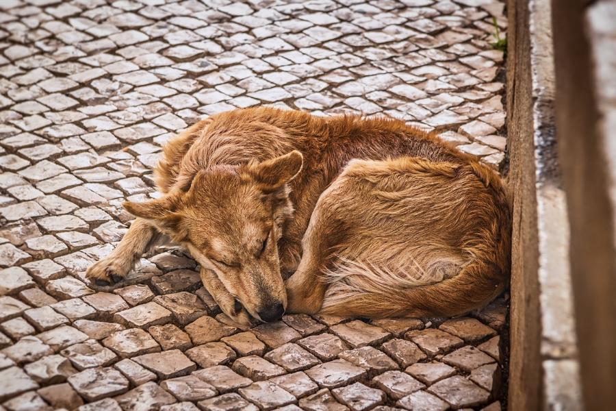 Волонтеры Тамбовской области помогут бездомным животным