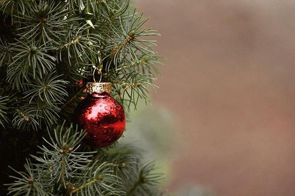 Житель Мичуринска украл елку, чтобы отпраздновать Новый год