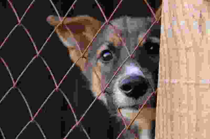 На отлов бродячих собак в Тамбове потратят 9 миллионов рублей