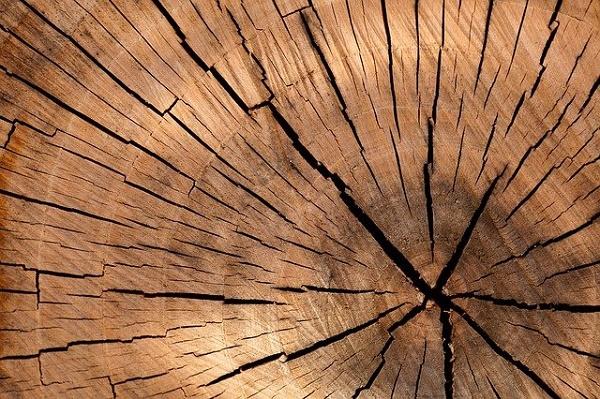 Полицейские задержали мужчину, который незаконно рубил деревья в Тамбовской области