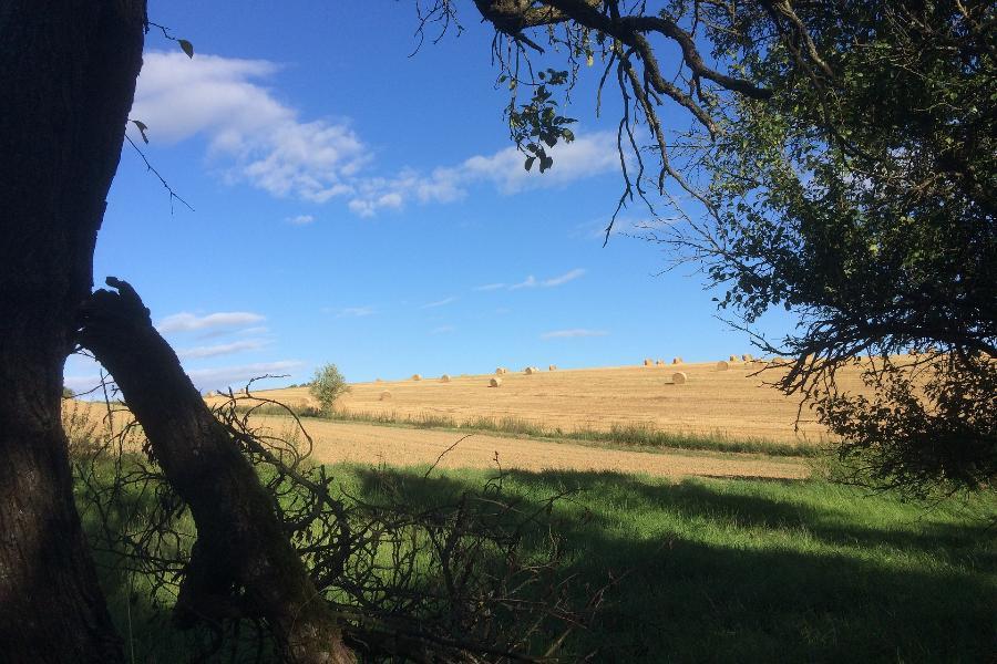 Предпринимательнице придётся вернуть арендованную землю в муниципальную собственность