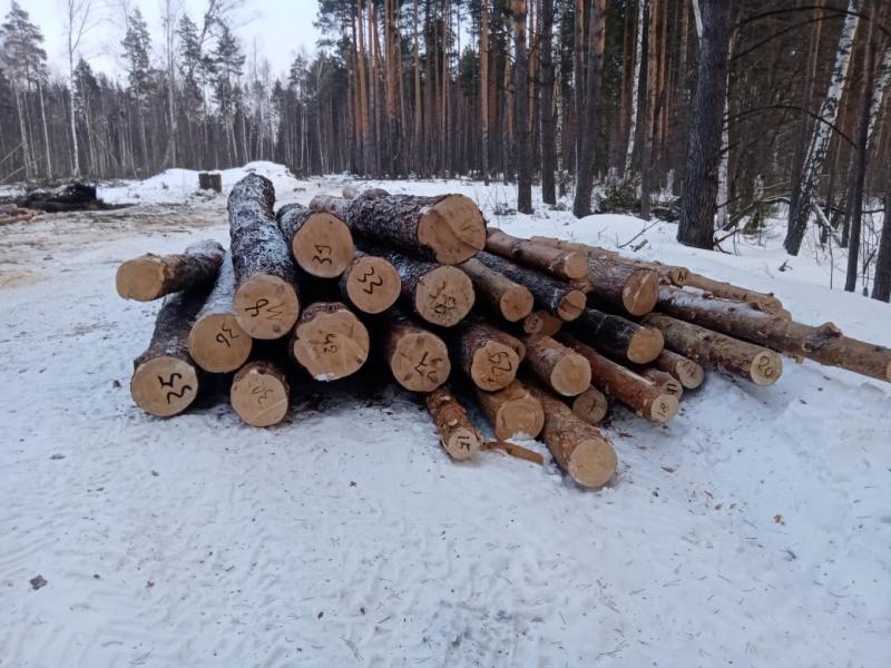 Тамбовчанин незаконно вырубал лес