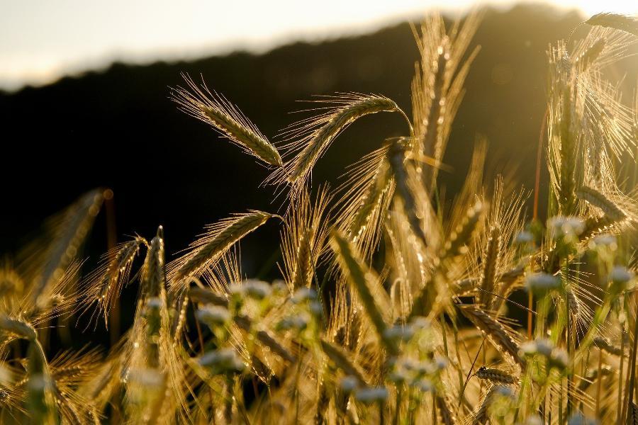 В Тамбовской области готовятся к весенним посевам