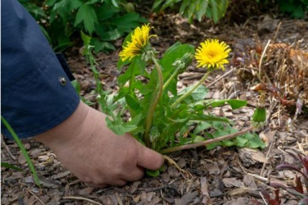 В Тамбовской области на работу требуются уничтожители сорняков и сборщики металлолома