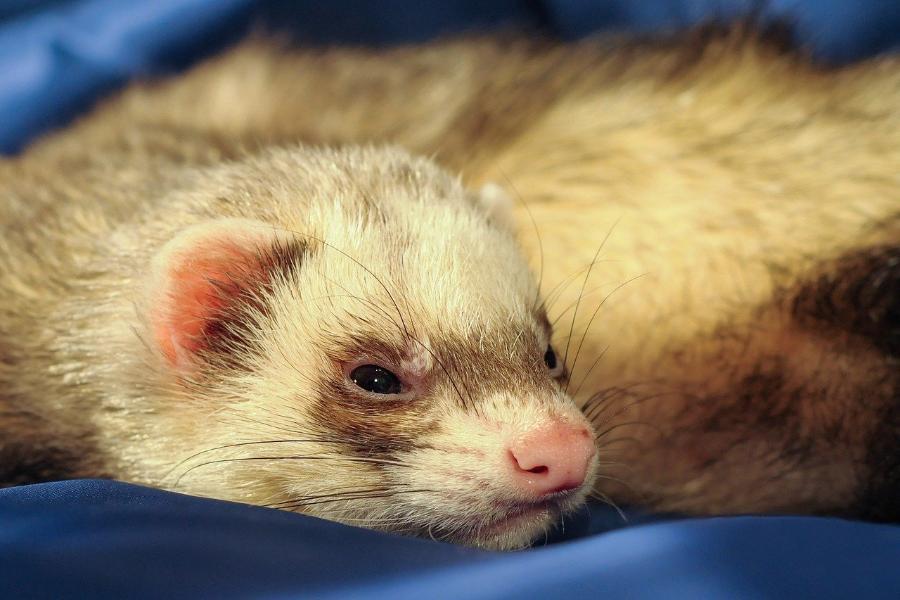 Вакцину от коронавируса для животных создадут в апреле