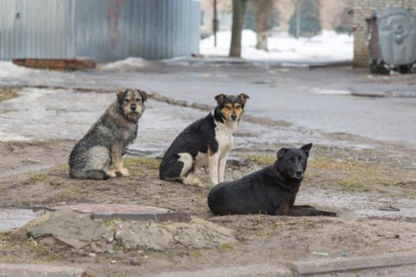 Депутаты отозвали резонансный законопроект о праве регионов усыплять бездомных животных