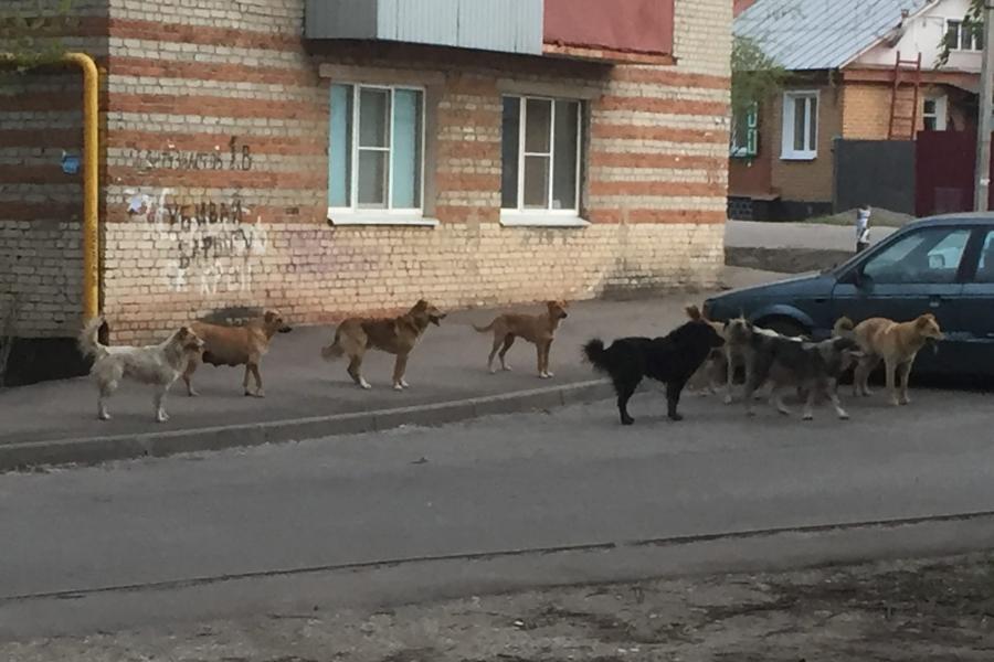 Регионы России смогут регулировать число бездомных животных