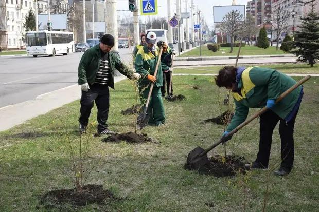 В ближайший месяц в Тамбове планируют посадить 1000 деревьев и 3500 кустарников