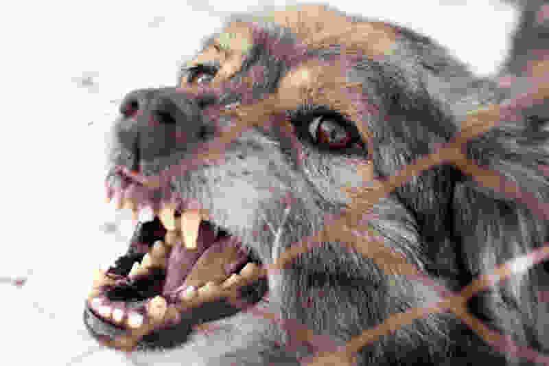 В регионе обнаружено 2 новых случая бешенства собак