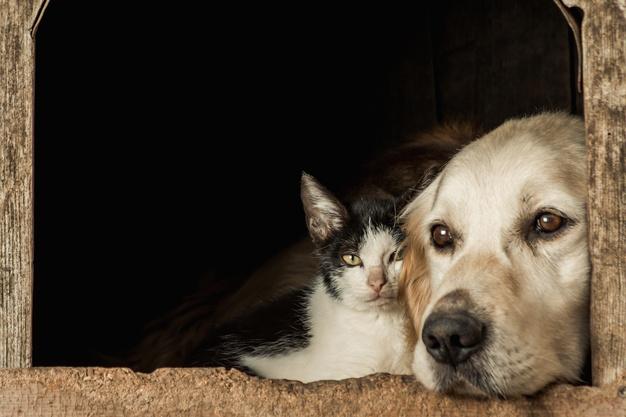 Врач назвала опасные заболевания, передающиеся от домашних животных