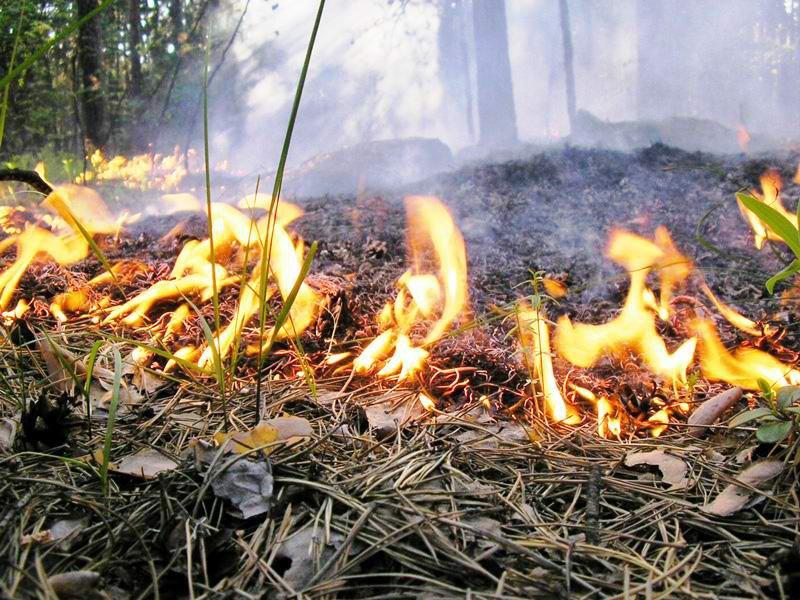 Из-за непрекращающихся пожаров в регионе введут особый противопожарный режим
