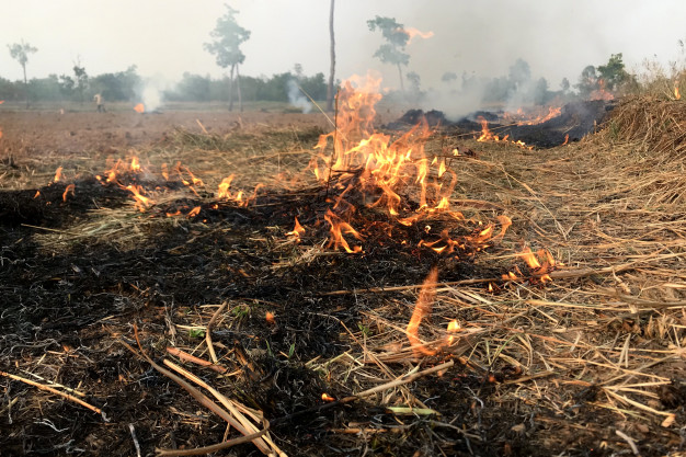 Тамбовчан предупредили о штрафах за поджог сухой травы