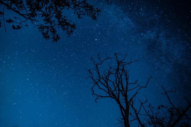 Тамбовчане смогут увидеть метеорный поток Лириды