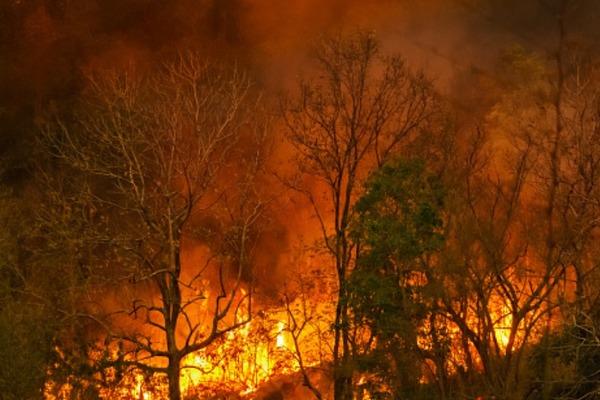 Тамбовская область стоит на пороге введения особого противопожарного режима в лесах