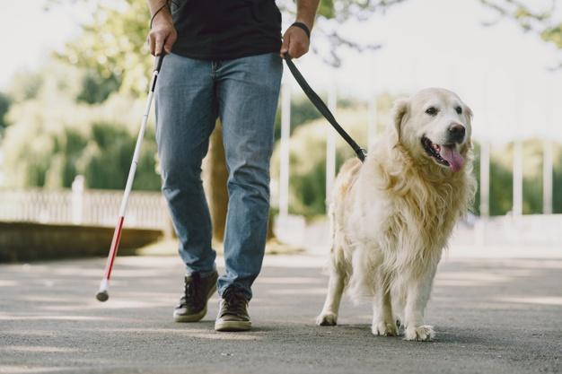 Требования к выгулу собак-поводырей хотят упростить