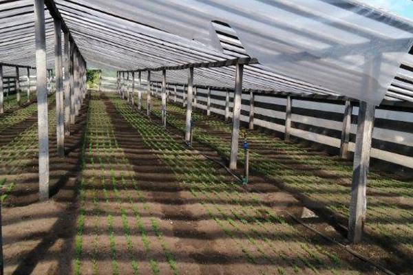 В лесных питомниках Тамбовской области высадят более 8 млн сеянцев