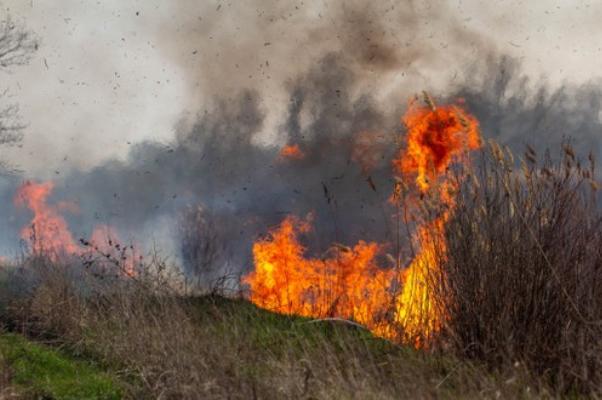 В Мичуринске при пожаре погибла пенсионерка
