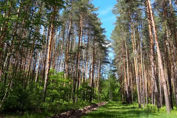 В период майских праздников в Тамбовской области усилят патрулирование лесов