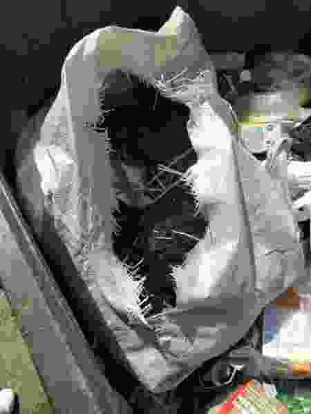 В Тамбове собаку расстреляли и раненой выбросили в мусор