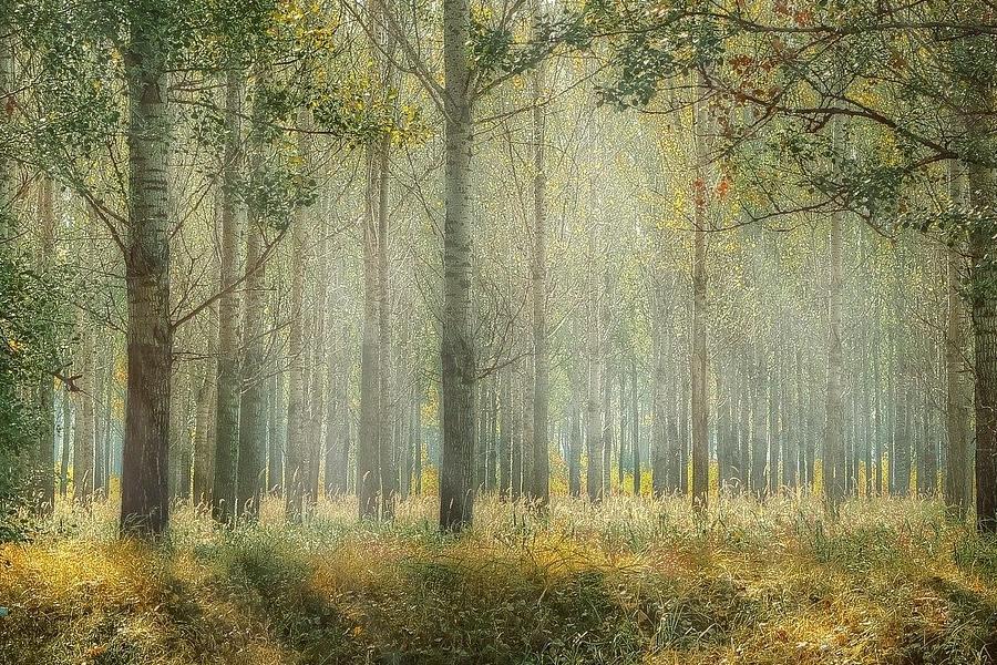 В Тамбове высадили больше 200 гектаров молодого леса