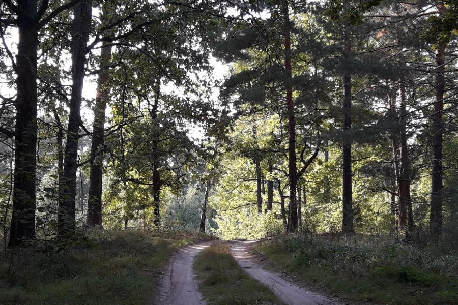 В Тамбовской области начали высаживать молодой лес