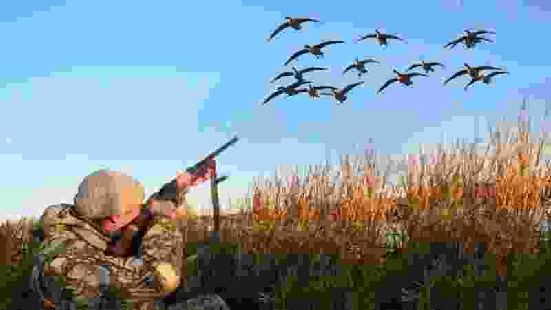 В Тамбовской области оштрафовали более полусотни охотников